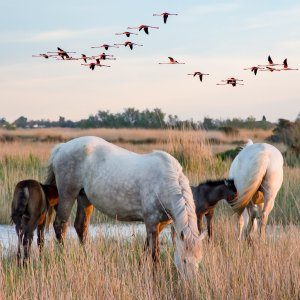 scene-of-the-camargue-6-2493873